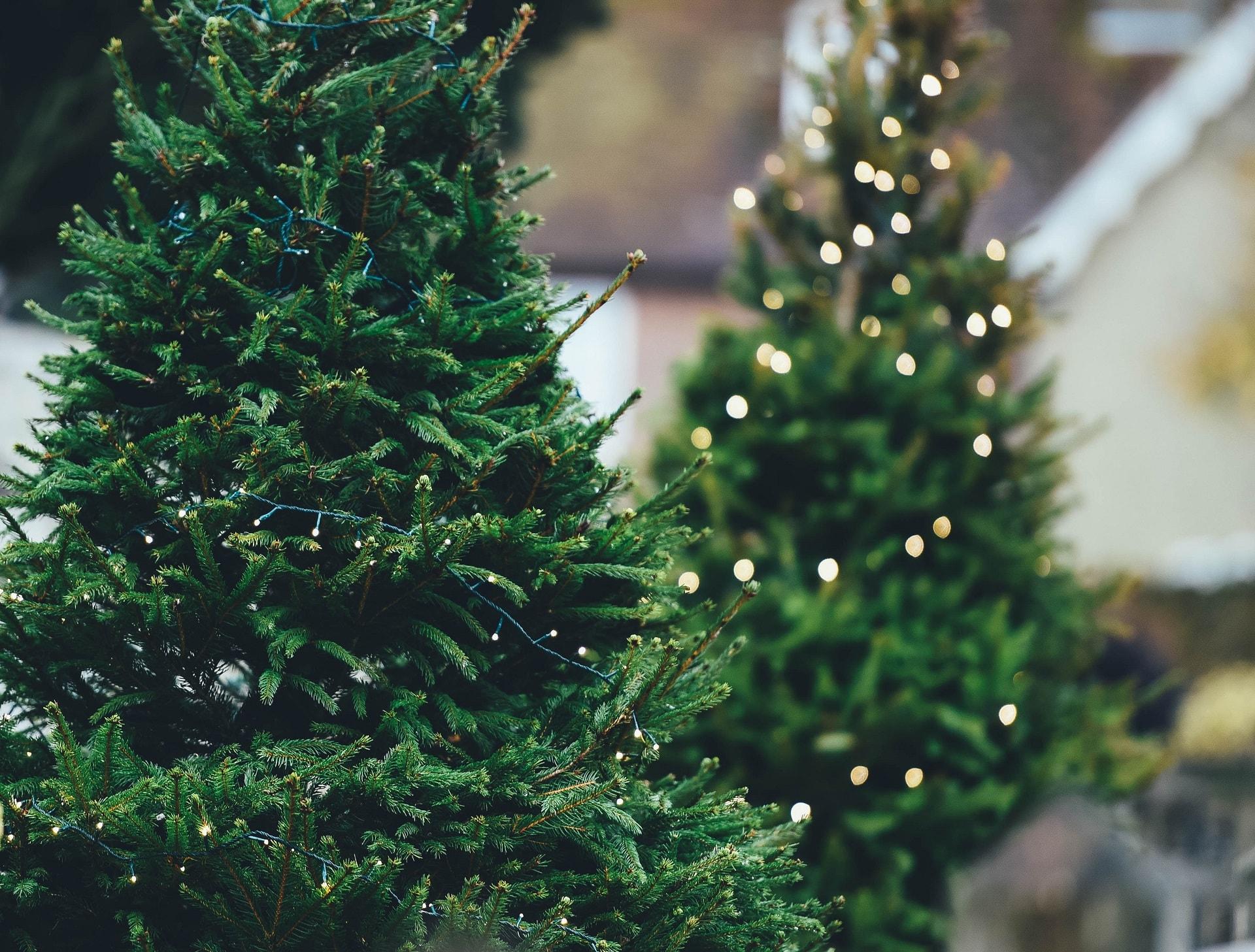 Weihnachtsbaum kaufen berlin marzahn