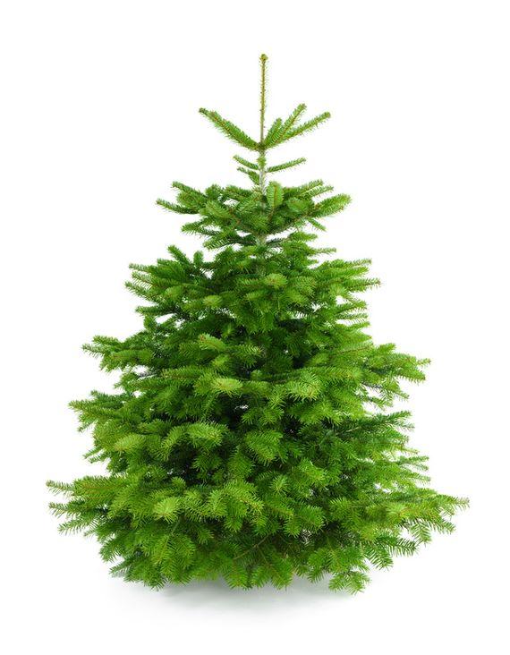 Weihnachtsbaum Berlin Lieferung.Weihnachtsbaum Komplettangebot Mit Lieferung Aufstellservice